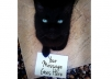 give you a hi-res instagram style photo of my cute kitten cat holding a sign with your message / logo / website